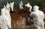Phát hiện các ổ dịch tả lợn châu Phi tại Thái Bình và Hưng Yên